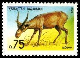 Steppe Fauna - Saigak