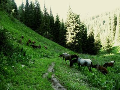 Horses in Chimbulak in Summer