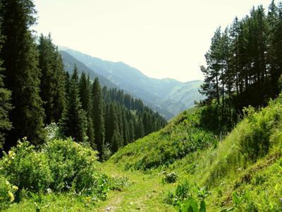 Evergreen Chimbulak in Summer